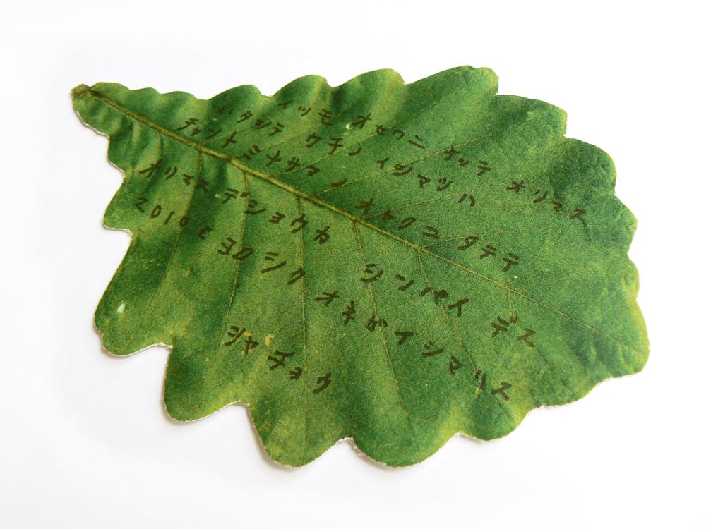 どんぐりの葉っぱ1